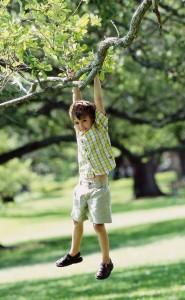 Администрация Жигулевска заказала работы по вырубке аварийных деревьев на территориях школ и детских садов